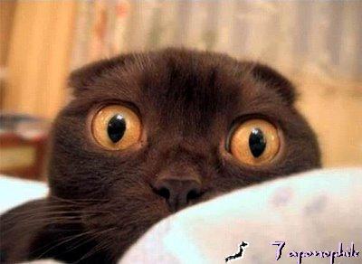 gato-susto.jpg